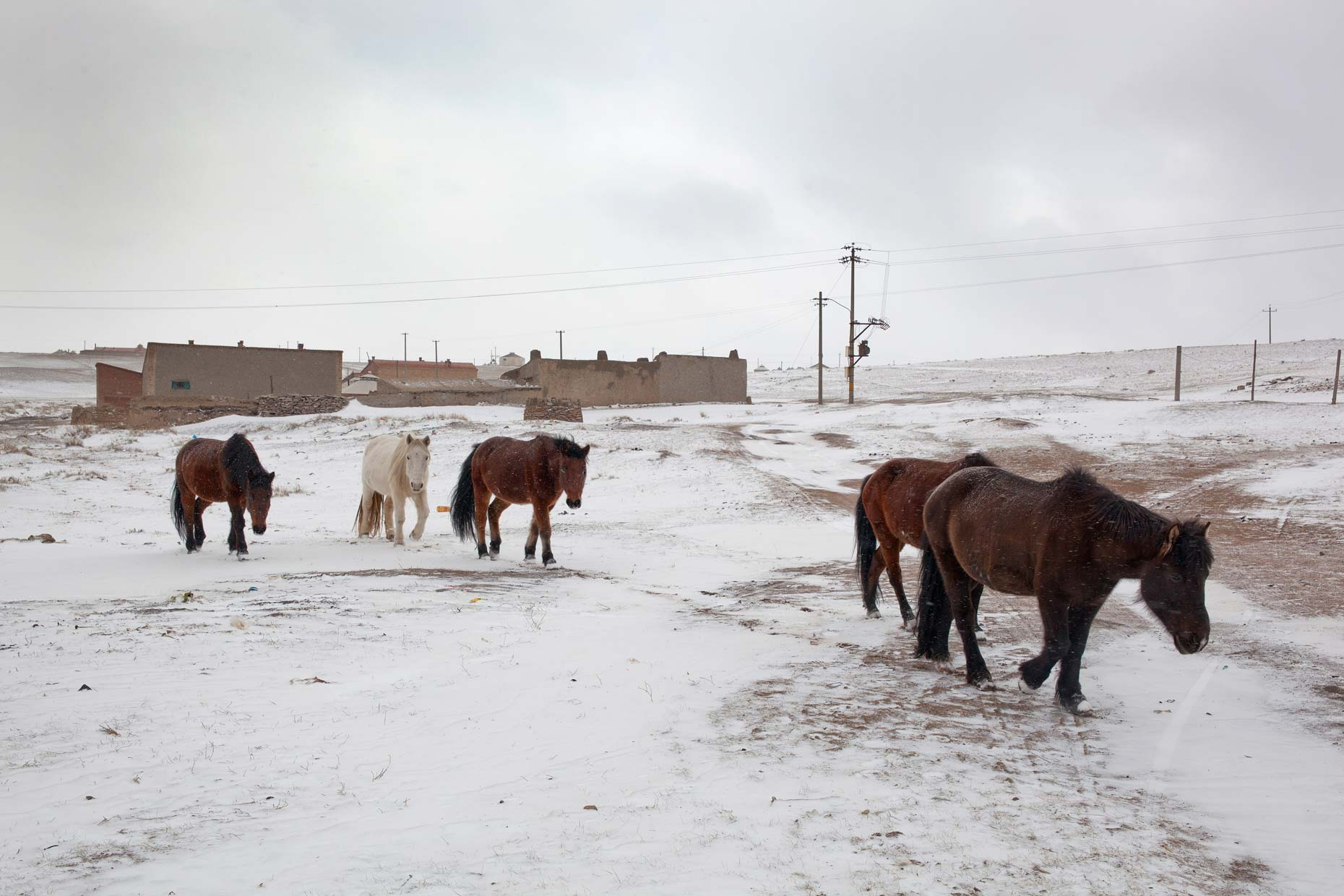 China-Inner-Mongolia-winter-horses