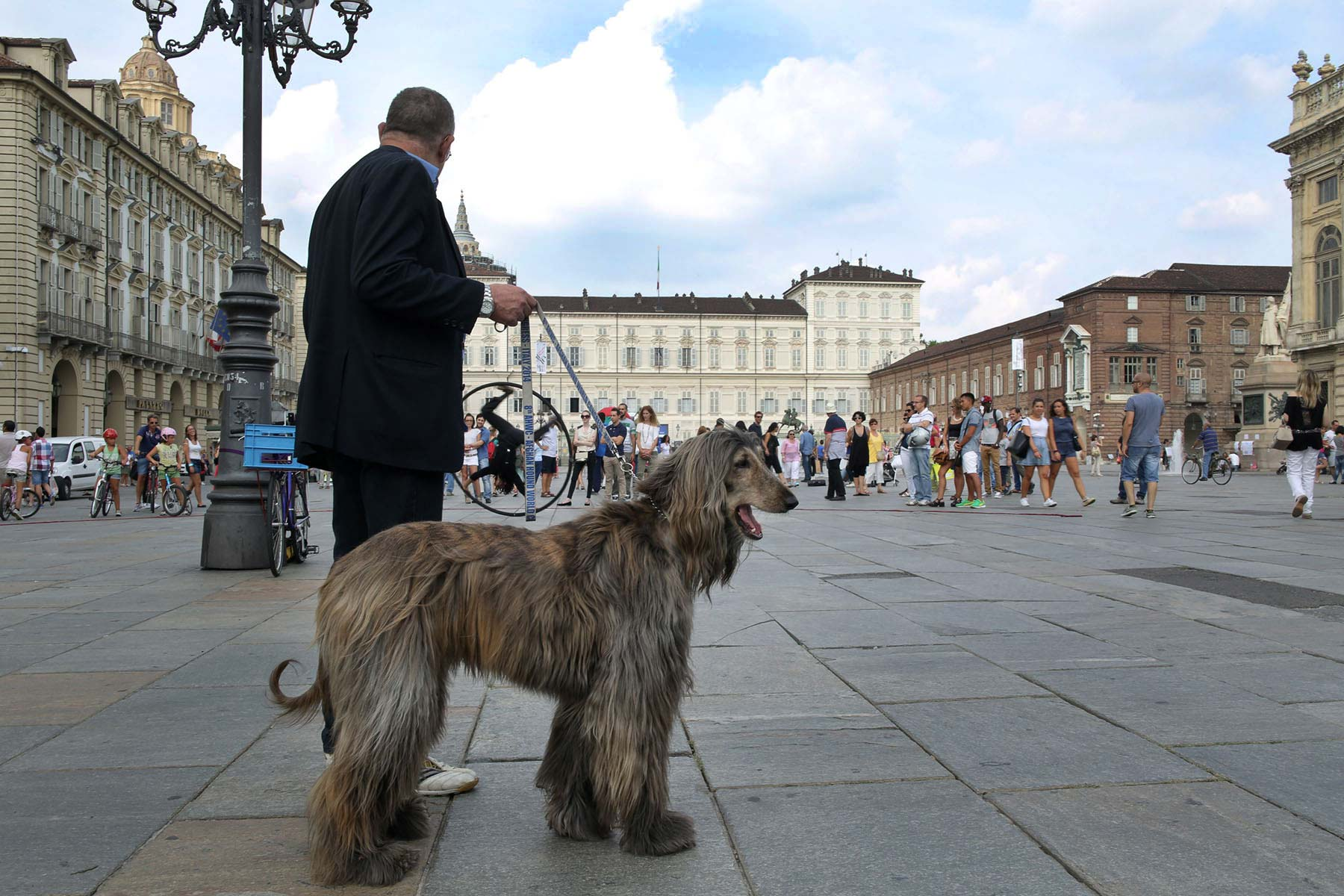 Italy-Turin-Piazza-Reale-Afghan-Hound