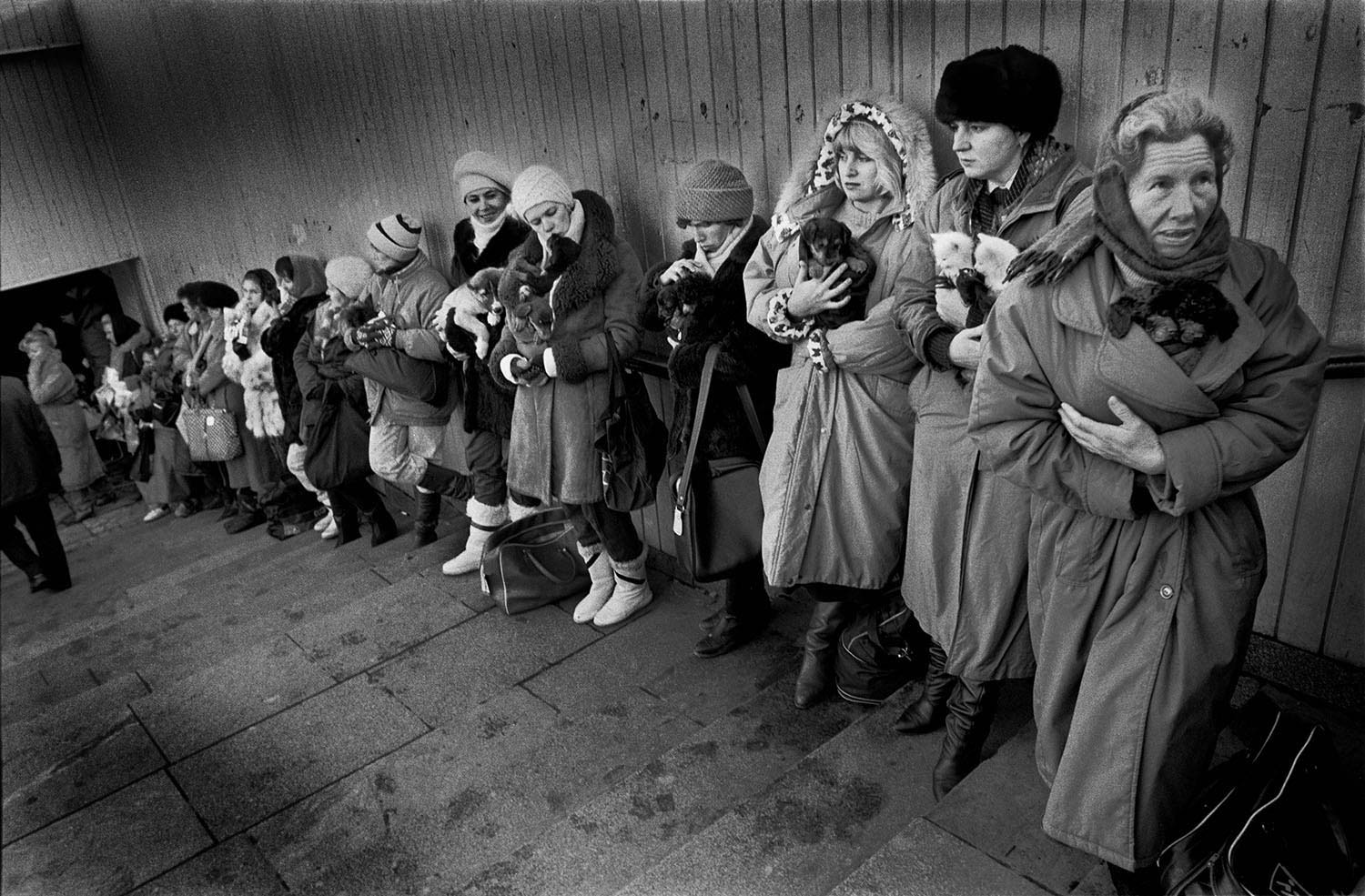 Moscow-pets-for-sale-1993