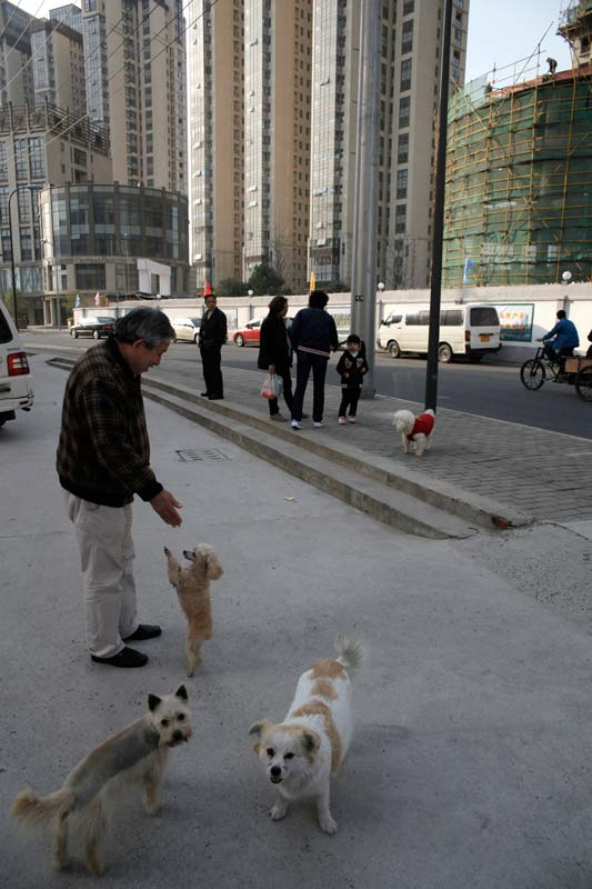 shanghai_burbs-3-dogs-and-owner_8537.jpg